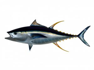 tonfisk öka testosteron tabletter